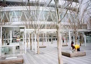 20020302ケヤキ広場.JPG