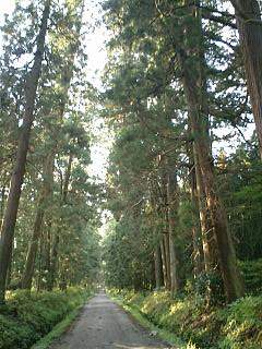 20051108日光杉並木n.JPG
