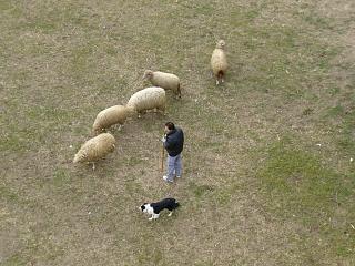 20060104相模川羊.JPG