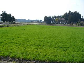 20060407田園風景.JPG