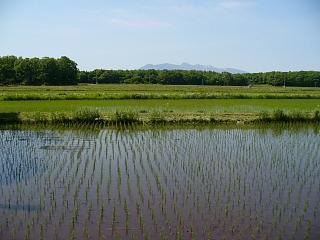 20060521田園風景.JPG