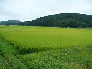 20060908水田風景.JPG